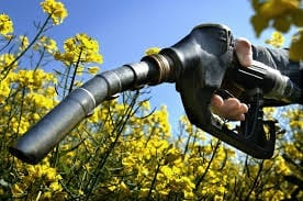 The biofuel debate