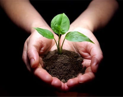 5 reasons soil is key to a sustainable future: Part 2