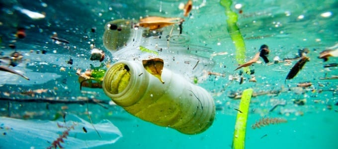 Plastics being found in deep sea fish are 'extraordinarily worrying' – Sustainability expert
