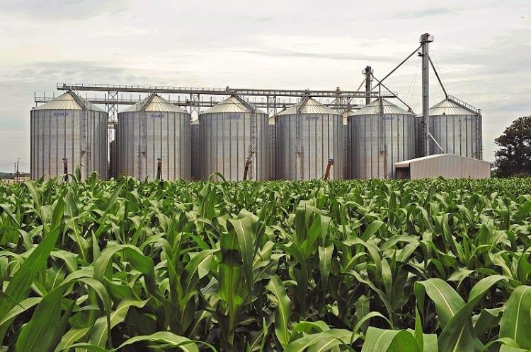 File picture: Maize farming
