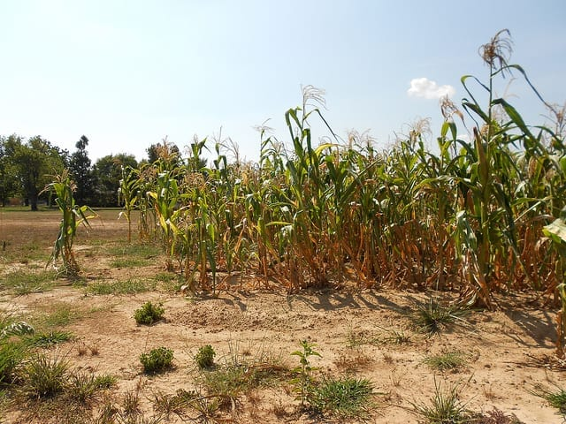Department cuts water allocations to drought-stricken farmers