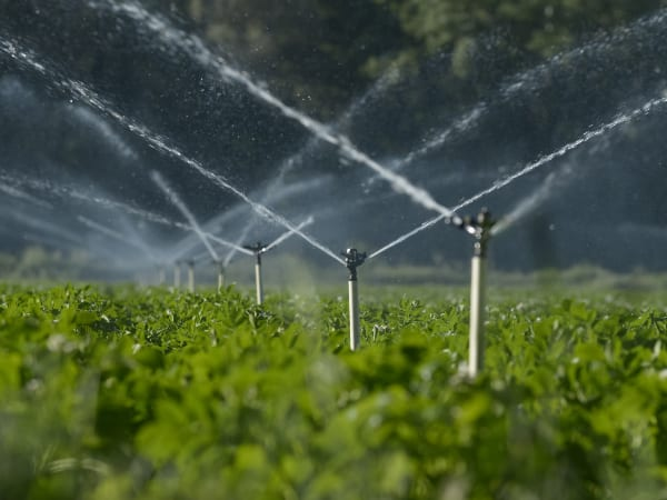 DWS engages emerging farmers on various issues in the water sector